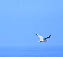 "seagull by Antonello Incagnone ""incant"""
