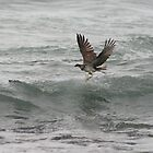 Osprey Dive Sequence - Got him! (5 of 6) by Matt  Harvey