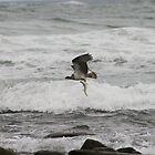 Osprey Dive Sequence - Take away dinner (6 of 6) by Matt  Harvey
