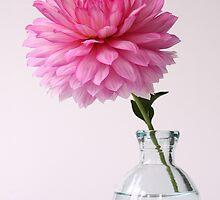 Dahlia in spherical vase by OldaSimek