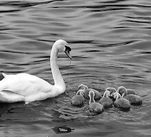 Ugly Ducklings by Ray Clarke