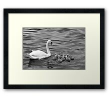 Ugly Ducklings Framed Print