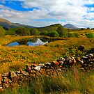 Cur.  Connemara  .  Ireland by EUNAN SWEENEY
