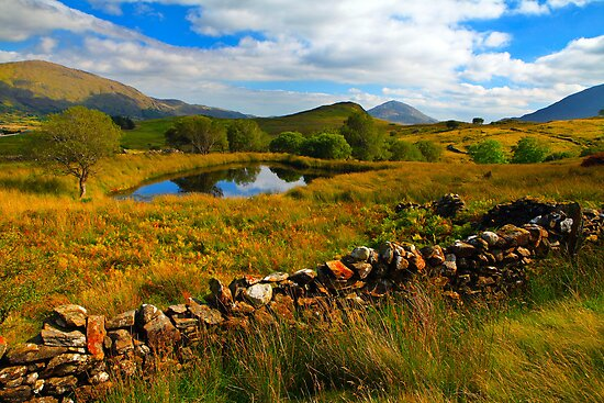 Cur.  Connemara  .  Ireland by EUNAN SWEENEY