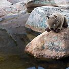 Wombie wants to cool down by Pascal and Isabella Inard