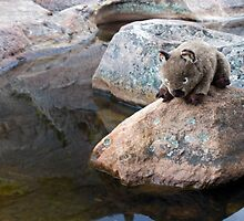 Wombie wants to cool down by Pascal Inard