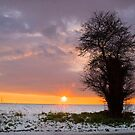 Lone Tree at Sunset by Geoff Carpenter