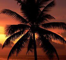 Hikkaduwa Palm Tree (Sri Lanka) by BGpix