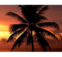 Hikkaduwa Palm Tree (Sri Lanka) Photographic Print