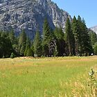 Yosemite National Park landscape photography.Bright summer majestic mountains,  lush trees, blue sky and warm green yellow meadow. by naturematters