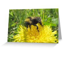 Bumble Bee And The Yellow Flower Greeting Card