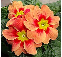 Flower of Love. Photographic Print