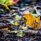 The leaf with a heart by Vicki Field