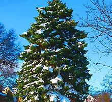 Evergreen in Winter by Susan Savad