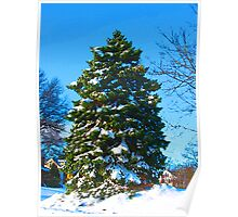 Evergreen in Winter Poster