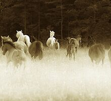 Horses  . Sligo  .Ireland by EUNAN SWEENEY
