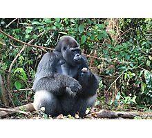 Djala The Silverback Gorilla #6 Photographic Print