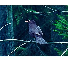 A Bird In The Dark Forest Photographic Print