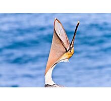 Brown Pelican Head Throw or Yawn Photographic Print