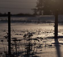 Fence against the light by RosiePosie