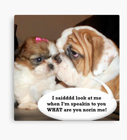 English Bulldog Humor Canvas Print