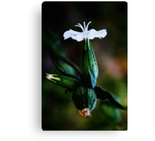 White Effect (from wild flowers collection) Canvas Print
