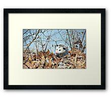 Playful Possum Framed Print