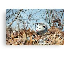 Playful Possum Canvas Print
