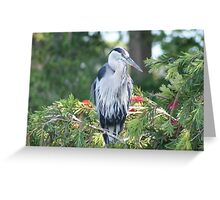 The Elegant Great Blue Heron Greeting Card