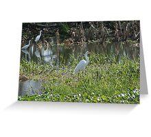 White Egrets Greeting Card