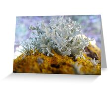Lichens on a tree trunk Greeting Card
