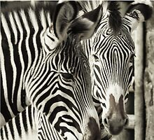 Stripes by Franco De Luca Calce