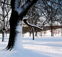 Winter Oak 2 by mikebov