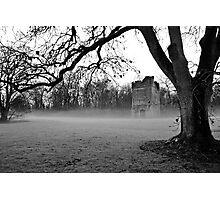 Lanestown,Newbridge Demesne  Photographic Print