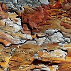 Bark Abstract 2 by Jessica Jenney