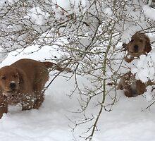 Peek A BOO Pups- 10 by goldnzrule