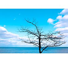 Tree by Lake Michigan Photographic Print