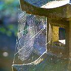 Japanese Lantern by njordphoto