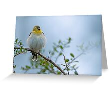 American Goldfinch in its Winter Coat Greeting Card