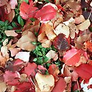 Fallen Leaves and Ivy by Kent Nickell