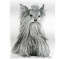 Yorkie Poster