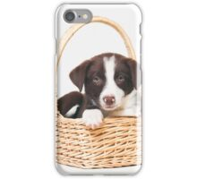 Animal Rescue Portraits - Border Collie in a Basket iPhone Case/Skin