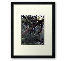 Gnarled Branches and Trees – February 4, 2010   Framed Print