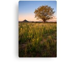 Lone Willow Tree Canvas Print