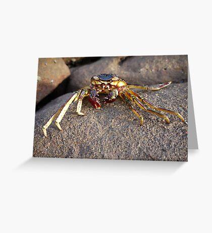 Crab shell, Panasonic GF1 14-45mm Lens Greeting Card