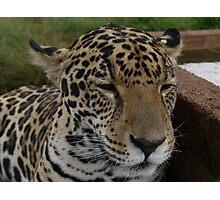 Jaguar Panasonic GF1 14-45mm Lens Photographic Print