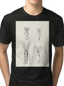 Manual of the New Zealand Mollusca by Henry Sutter 1915 0273 Squid Tri-blend T-Shirt