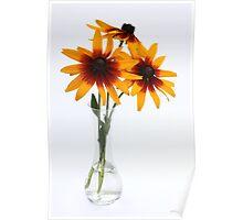 three rudbeckias in glas vase Poster