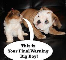 English Bulldog and Shih Tzu Puppies by Edmond  Hogge