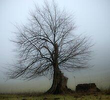 Half A Tree by CJTill
